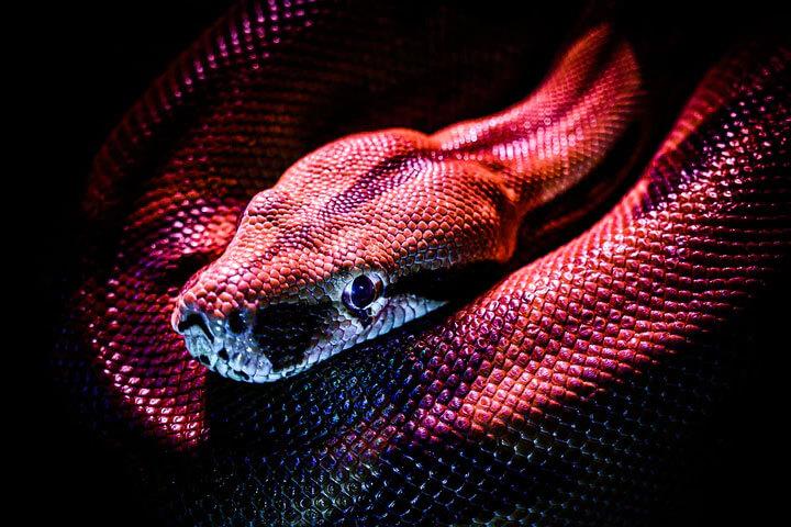 mơ thấy rắn điềm gì