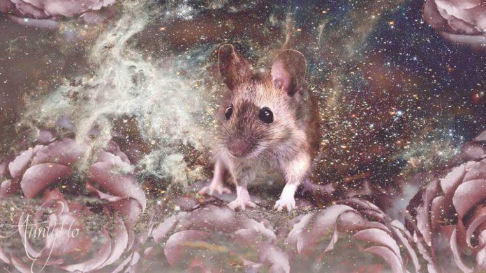 Giấc mơ thấy chuột