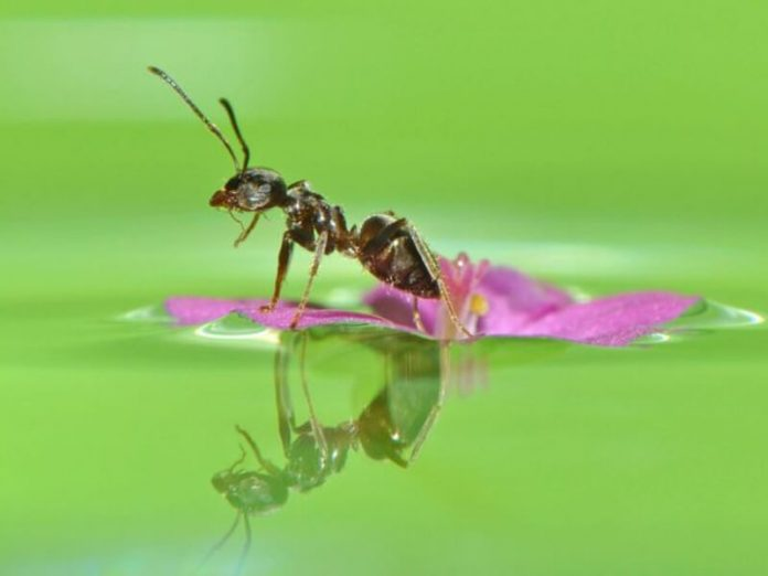 Giấc mơ về kiến