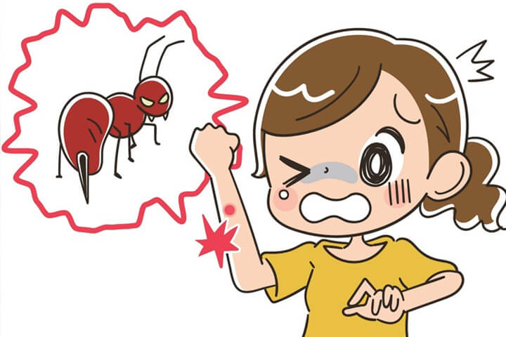 Mơ thấy kiến cắn