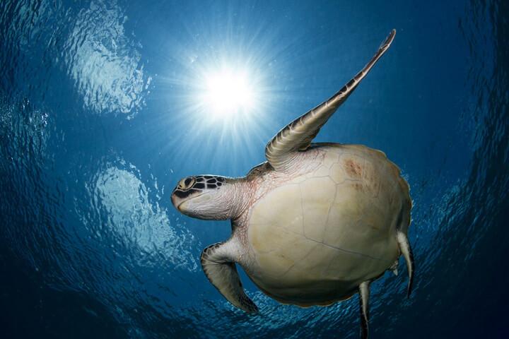 Nằm mơ rùa vận may