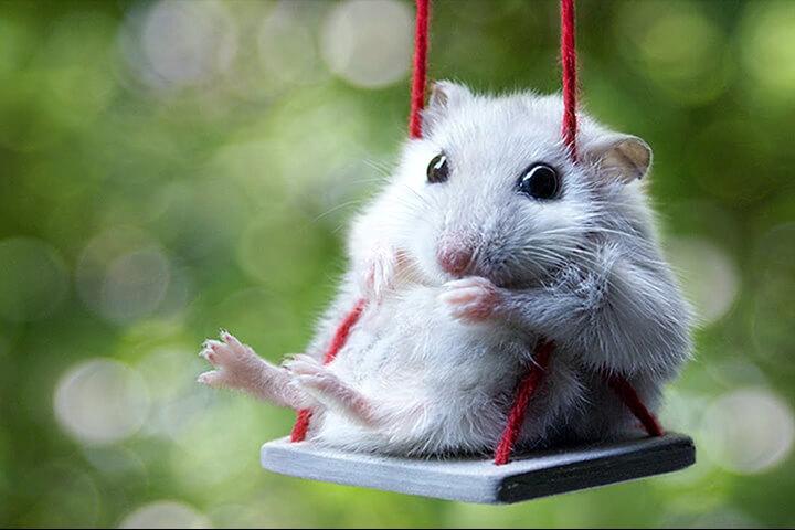 Năm mơ thấy chuột điều tốt lành