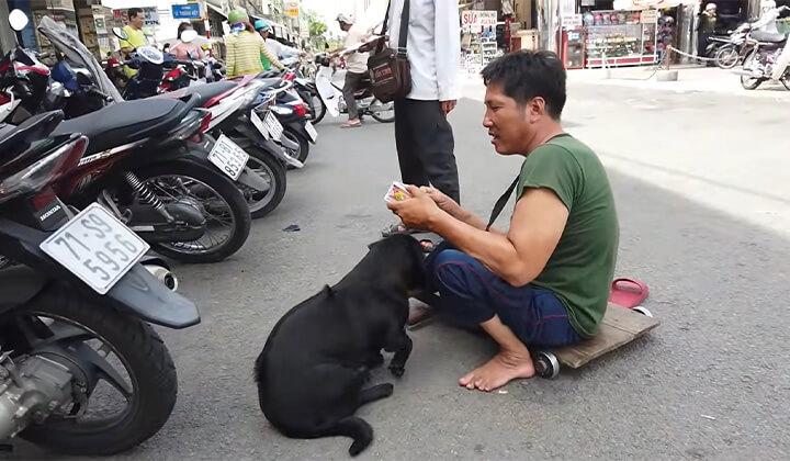 Chó bán vé số đông tháp
