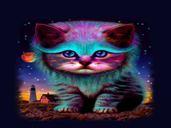nằm mơ về mèo