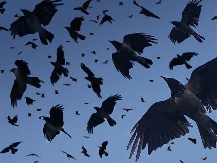 Điềm báo chim chết