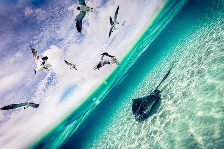 Vì sao chim cá sa lặng