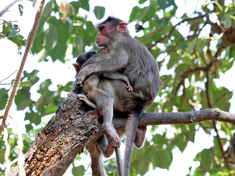 Chiêm bao thấy một con khỉ đang ngồi