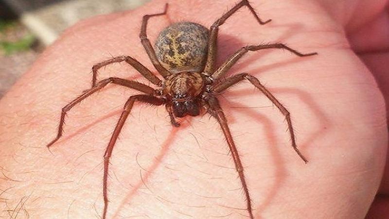 Chiêm bao mơ thấy bị nhện cắn thì sao?