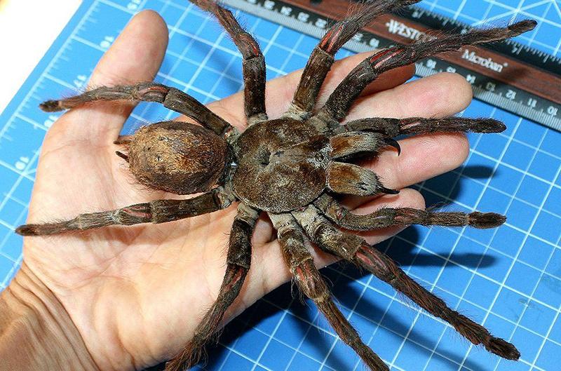 chiêm bao thấy mình đang nuôi nhện thì chúc mừng, công việc, sự nghiệp bản thân đang vào mùa hái quả