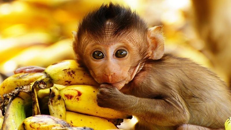 Nếu bạn đột nhiên nằm mơ thấy khỉ cắn và vết c