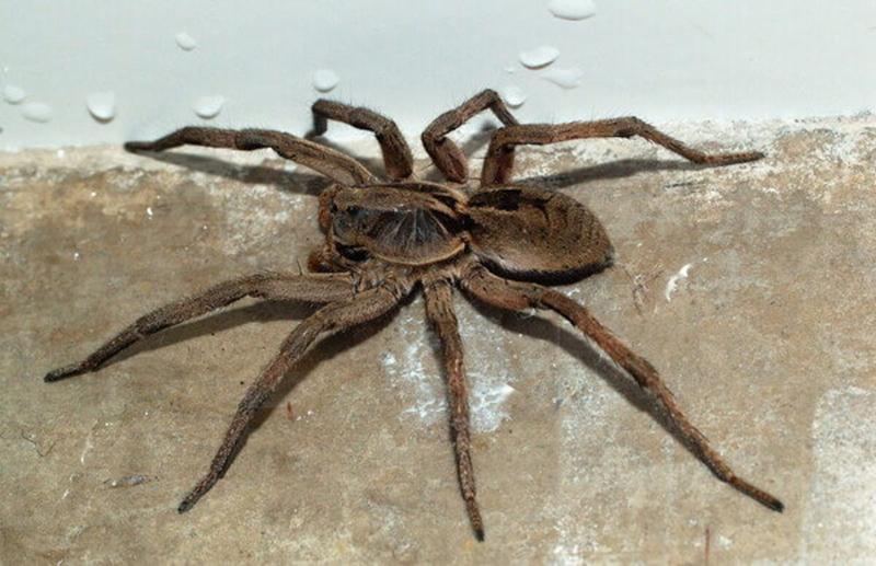 Nằm mơ thấy nhện mang ý nghĩa như thế nào?