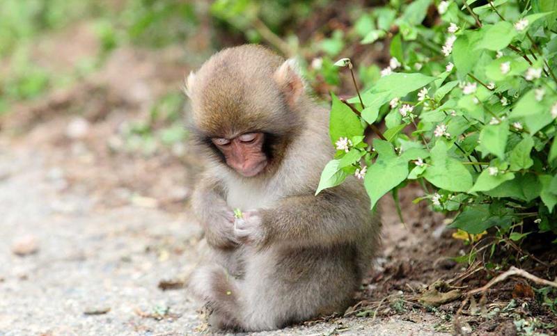Nằm mơ thấy khỉ là một giấc mơ không phải ai cũng hay mơ thấy