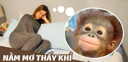 Nằm mơ thấy khỉ có điềm gì?