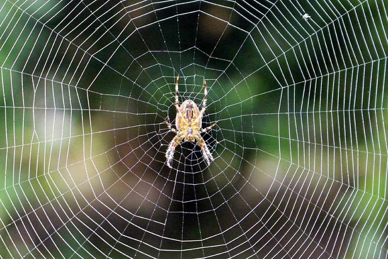 Nằm mơ thấy mạng nhện là điềm gì