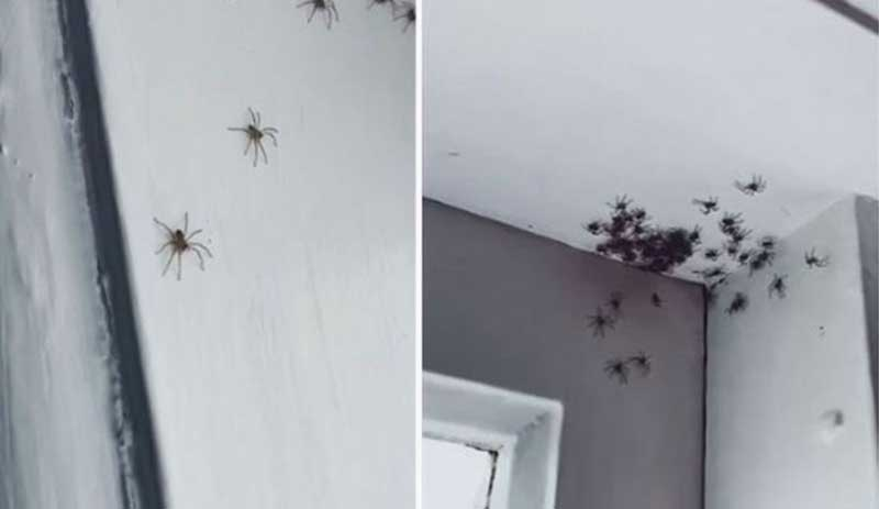 Nằm mơ thấy nhện làm tổ trong nhà
