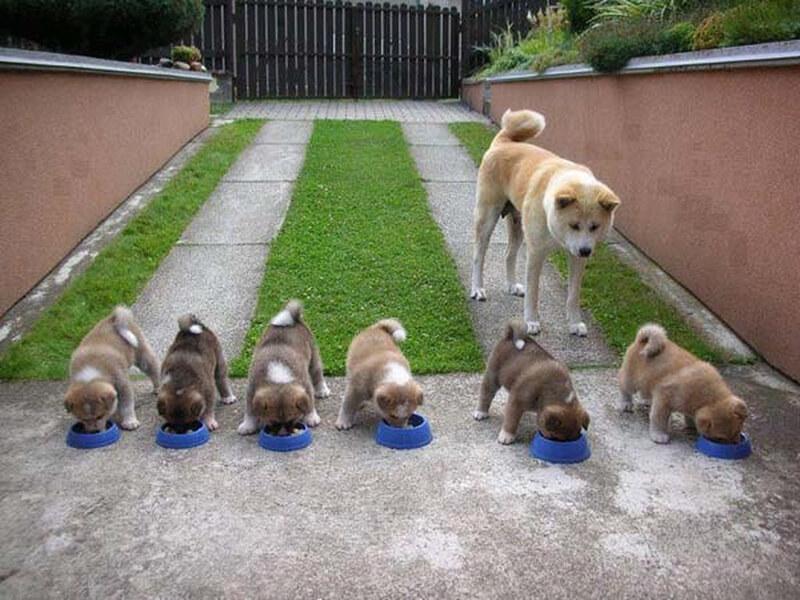 Chiêm bao thấy đàn chó con đang ăn