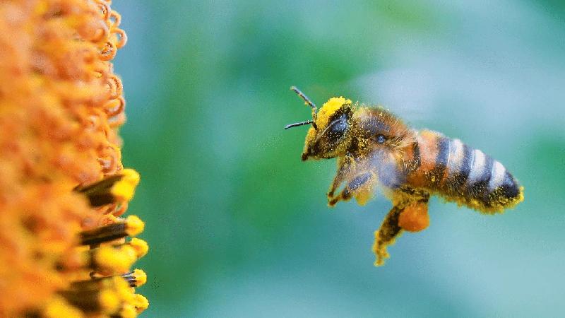 Ngủ mơ thấy đang lấy mật ong
