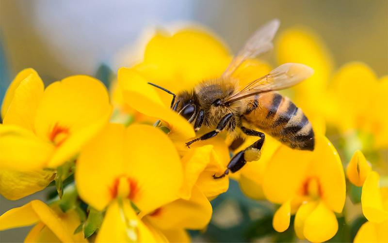 Nằm mơ thấy ong nên đánh con lô nào?