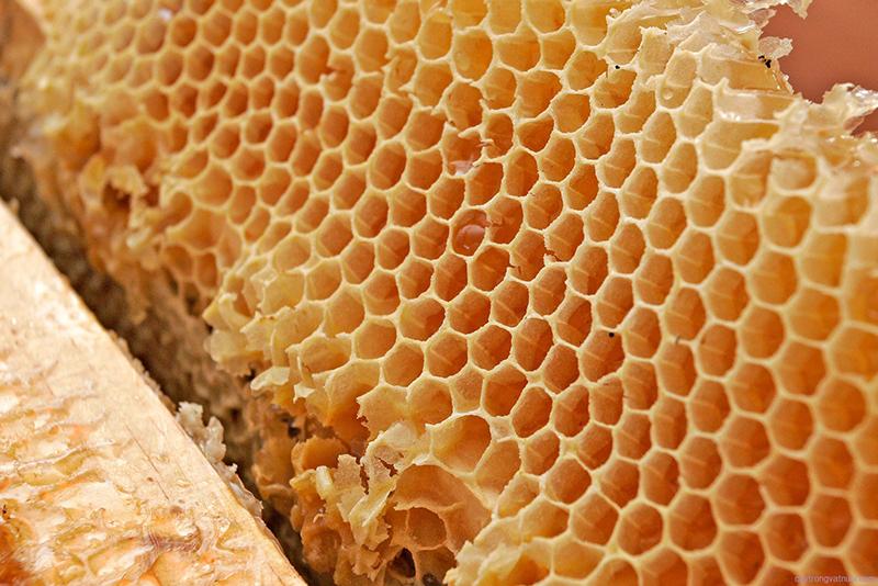 Nằm mơ thấy ong tổ