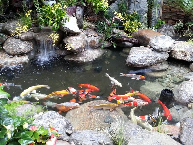 Chiêm bao thấy một hồ nước đầy ắp cá